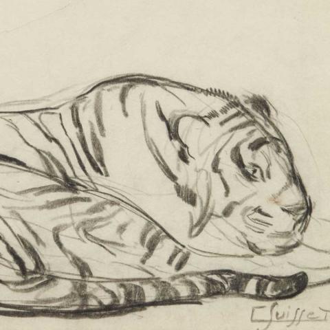 Tigre couché.